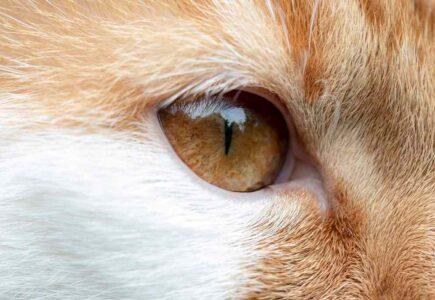 Ojos frontales