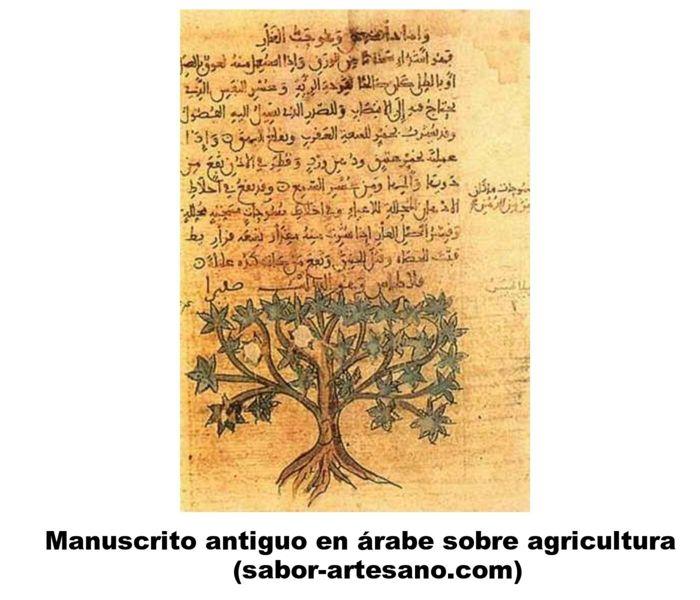 manuscrito arabe sobre agricultura
