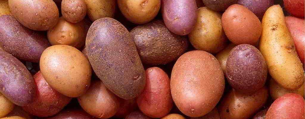 Historia de la patata